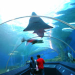 Impressive Aquarium Tunnel in Thailand by Classique Plastics