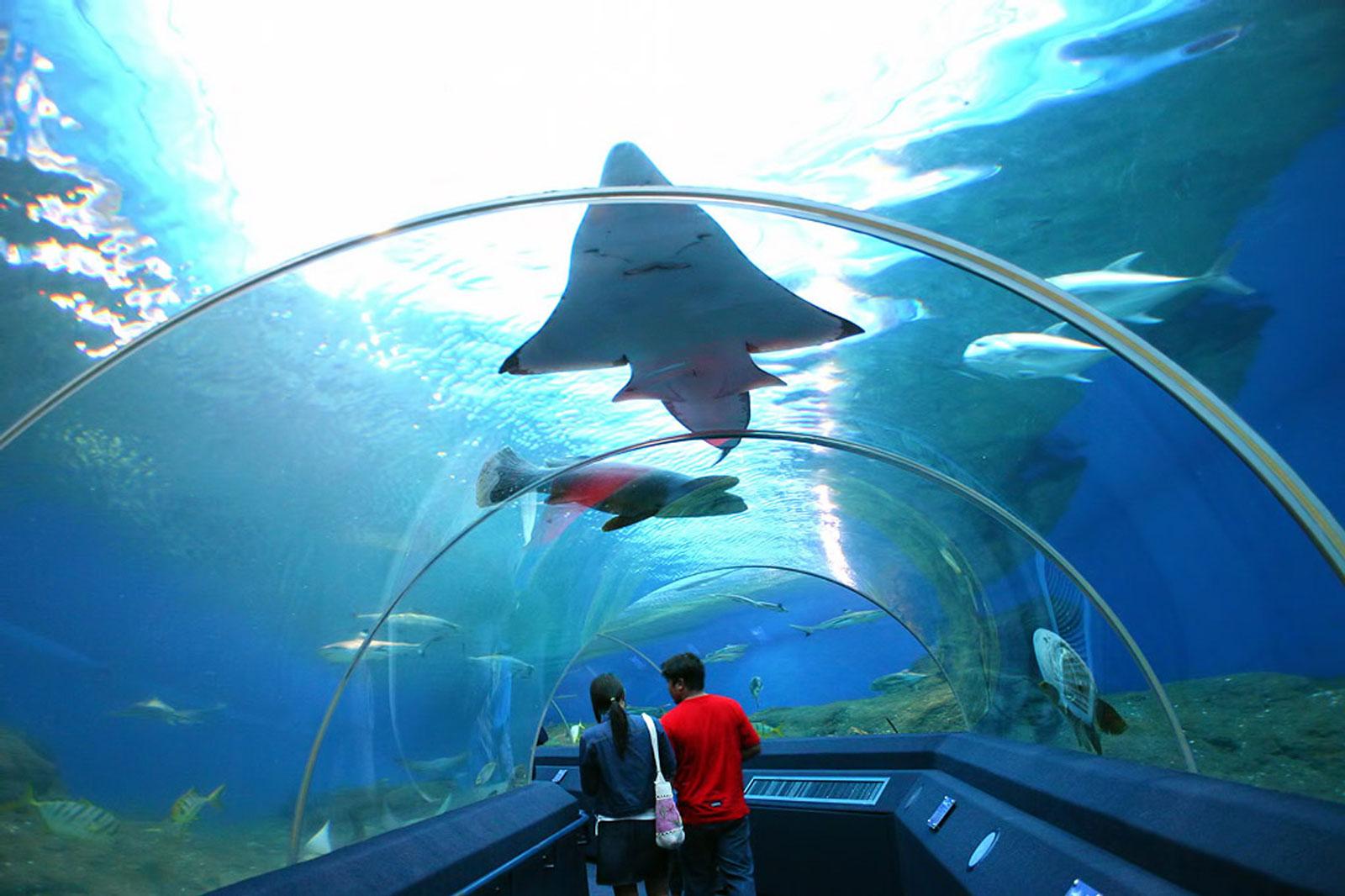 Impressive Aquarium Tunnel in Thailand by Classique Plastics