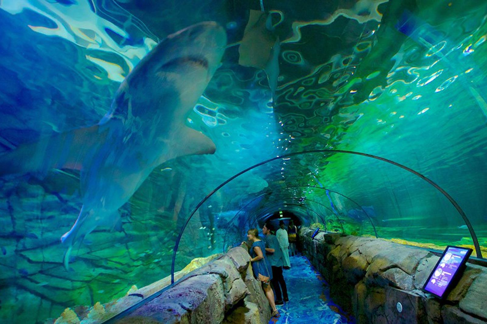 Sealife Aquarium Tunnel by Classique Plastics