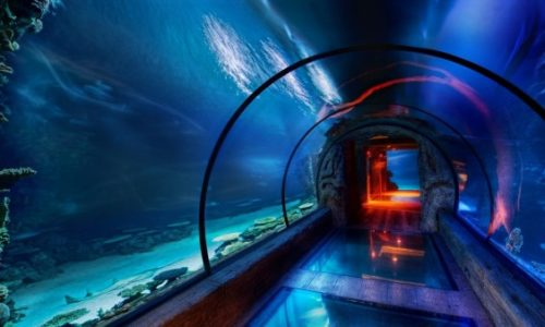 Aquarium-Glass-Tunnel-Under-the-Sea-600x338