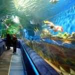 Aquarium Tunnel by Classique Plastics for Planet Neptune Russia