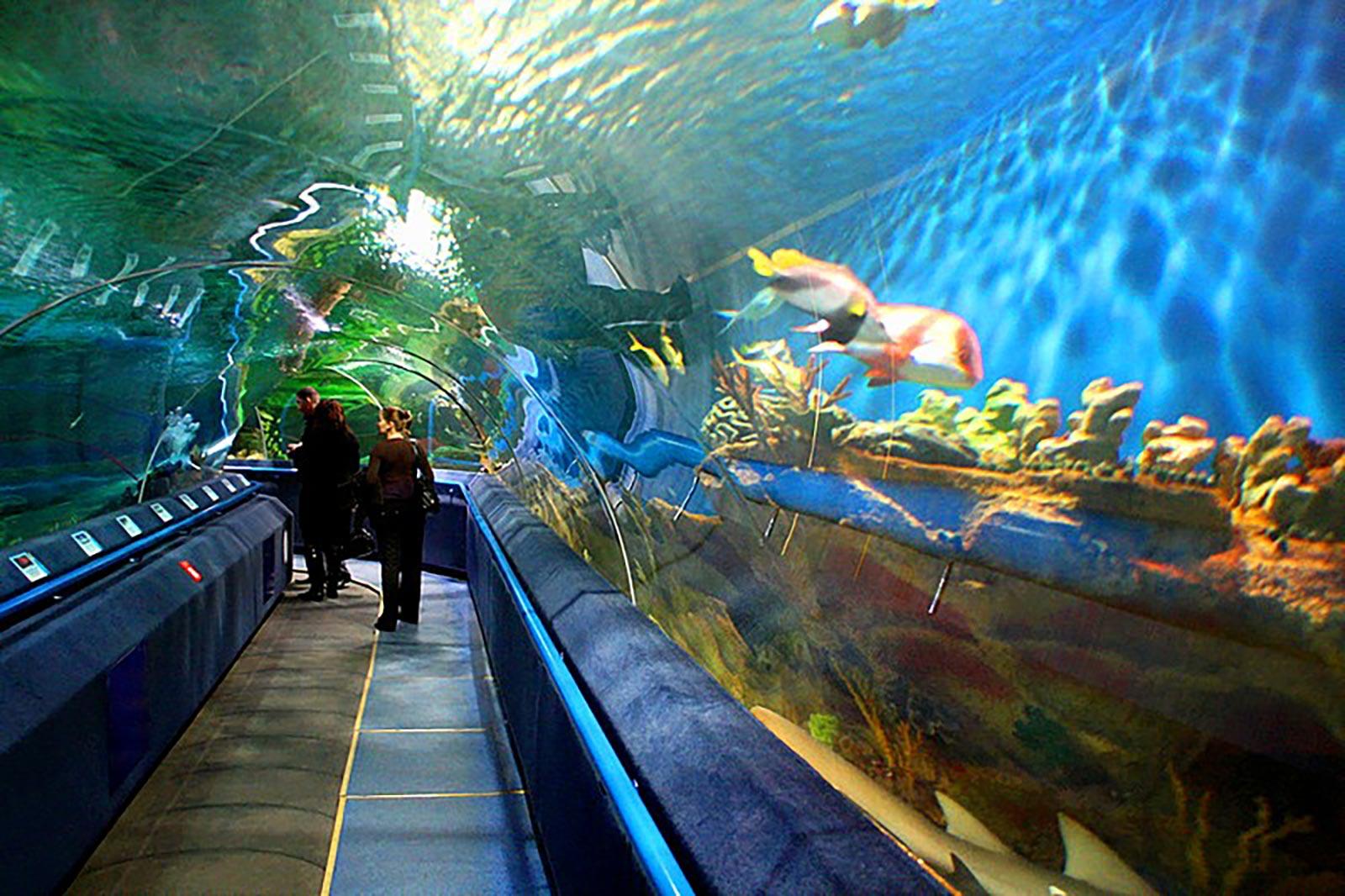 Aquarium Tunnel by Classique Plastics for Planet Neptune Russia