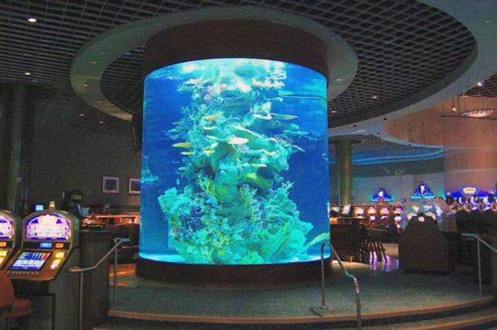 Aquarium Tank Maintenance by Classique Plastics for the Star Casino Australia