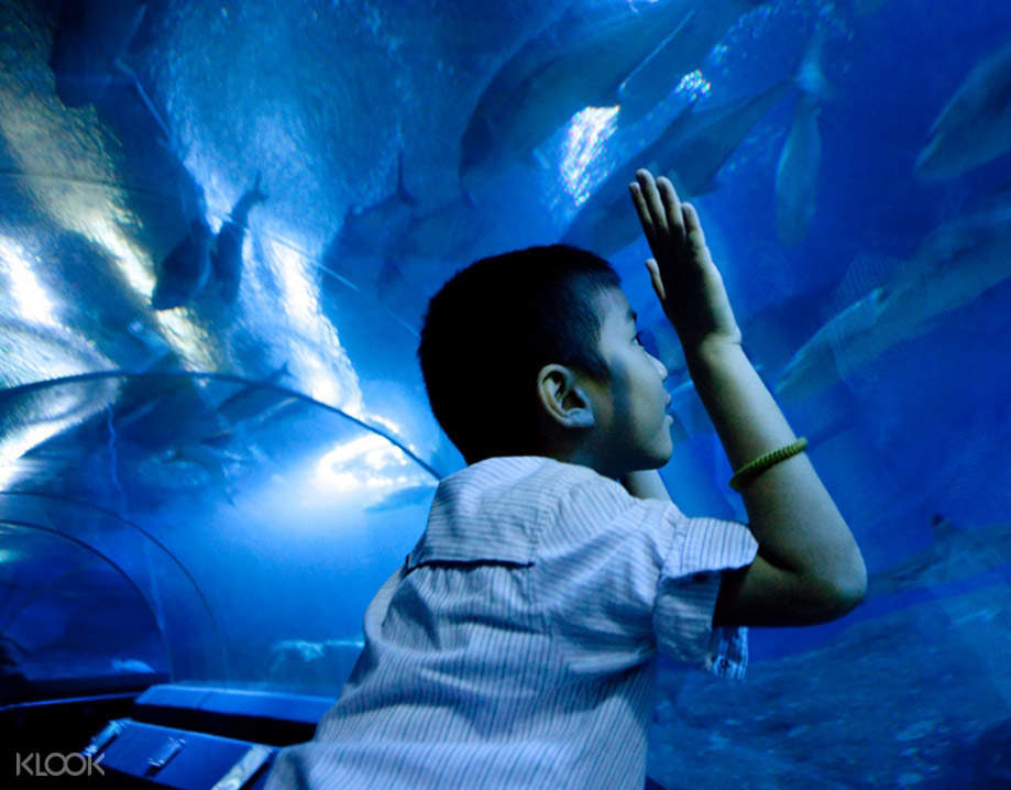 Aquarium Tunnel - Underwater World Pattaya