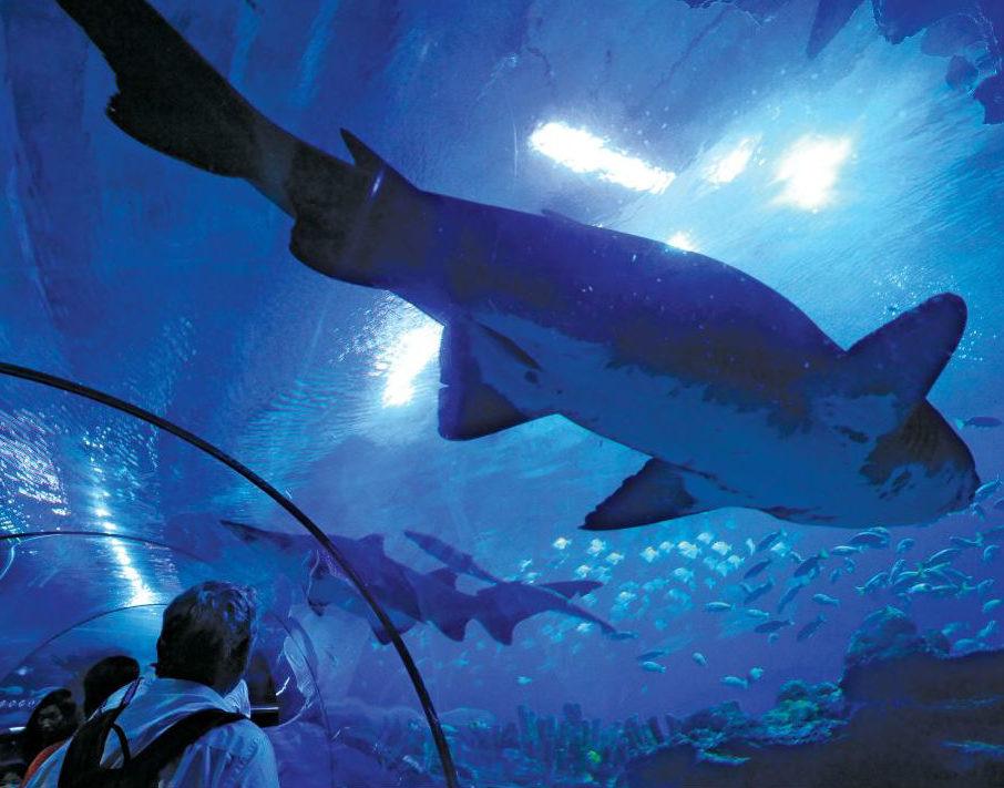 Aquarium Tunnel in Kuala Lumpur by Classique Plastics